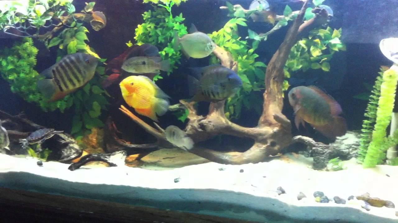 New 220 gallon turtle and cichlid aquarium youtube for 220 gallon fish tank