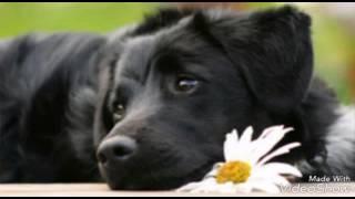 """Песня пропала собака по кличке """"дружок"""""""