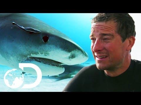 Bear Grylls VS Bull Sharks | SHARK WEEK 2018