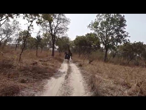 Fathala Wildlife Reserve - Senegal - Giraffe 1