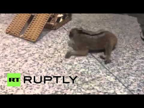 Russia: Man caught smuggling baby monkeys and small animals through Moscow airport