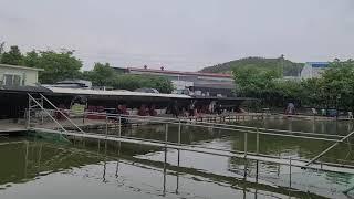 20210430 김포 고정낚시터 사이즈 좋은 향어 랜딩…