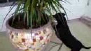 Dachshund Gracie Ann Lizard Hunting