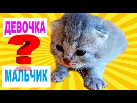 Как определить котят девочка или мальчик