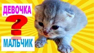 ОПРЕДЕЛЯЕМ ПОЛ НОВОРОЖДЕННЫХ КОТЯТ. Кто же светлый котенок?