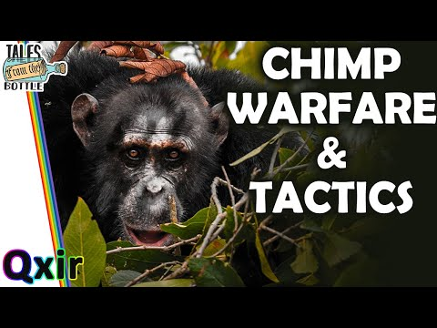 Can Chimps Wage War? | Tales From The Bottle