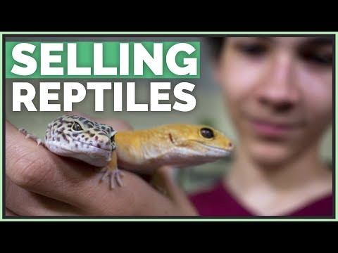 How Much Money I've Made Selling Pet Reptiles