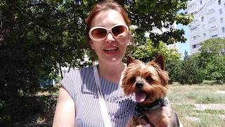 64.  Почему собака хромает? Опухла лапа. Лечение питомцев. Ветеринарная клиника.