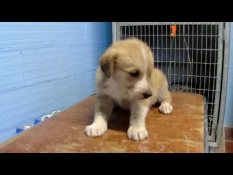 puppy blind and maybe deaf