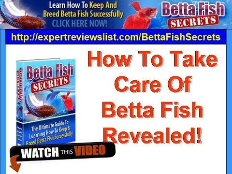How To Take Care Of Betta Fish Revealed Woohoo