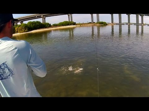 Tampa Bay Skyway Snook Fishing - Live Bait Chumming
