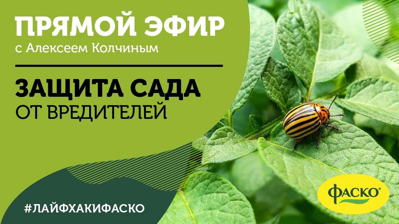 Защита сада от вредителей