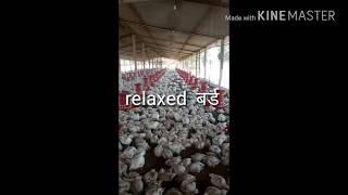 Poultry फार्म में temprature कम करने के लिए fogger लगवाये