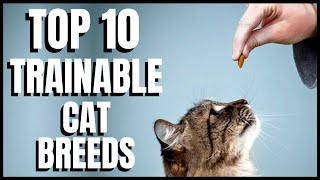 Top 10 Trainable Cat Breeds