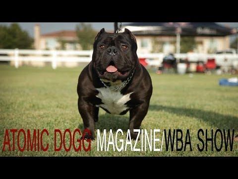 AMERICAN BULLY SHOW - ATOMIC DOGG MAGAZINE / WBA