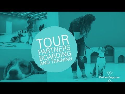 Dog Boarding Near Me | Dog Sitter | Affordable | Partners