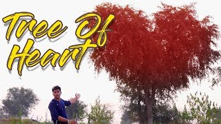 Best Lovers Point In India  | Rajasthan Vlog Part 7 | Rahul Purohit Vlogs