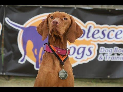 Cooper - Hungarian Vizsla - 3 Weeks Residential Dog Training