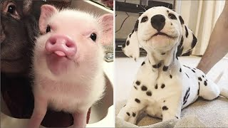 AWW CUTE BABY ANIMALS Videos Compilation cutest moment of the animals 2020 - Soo Cute! #46