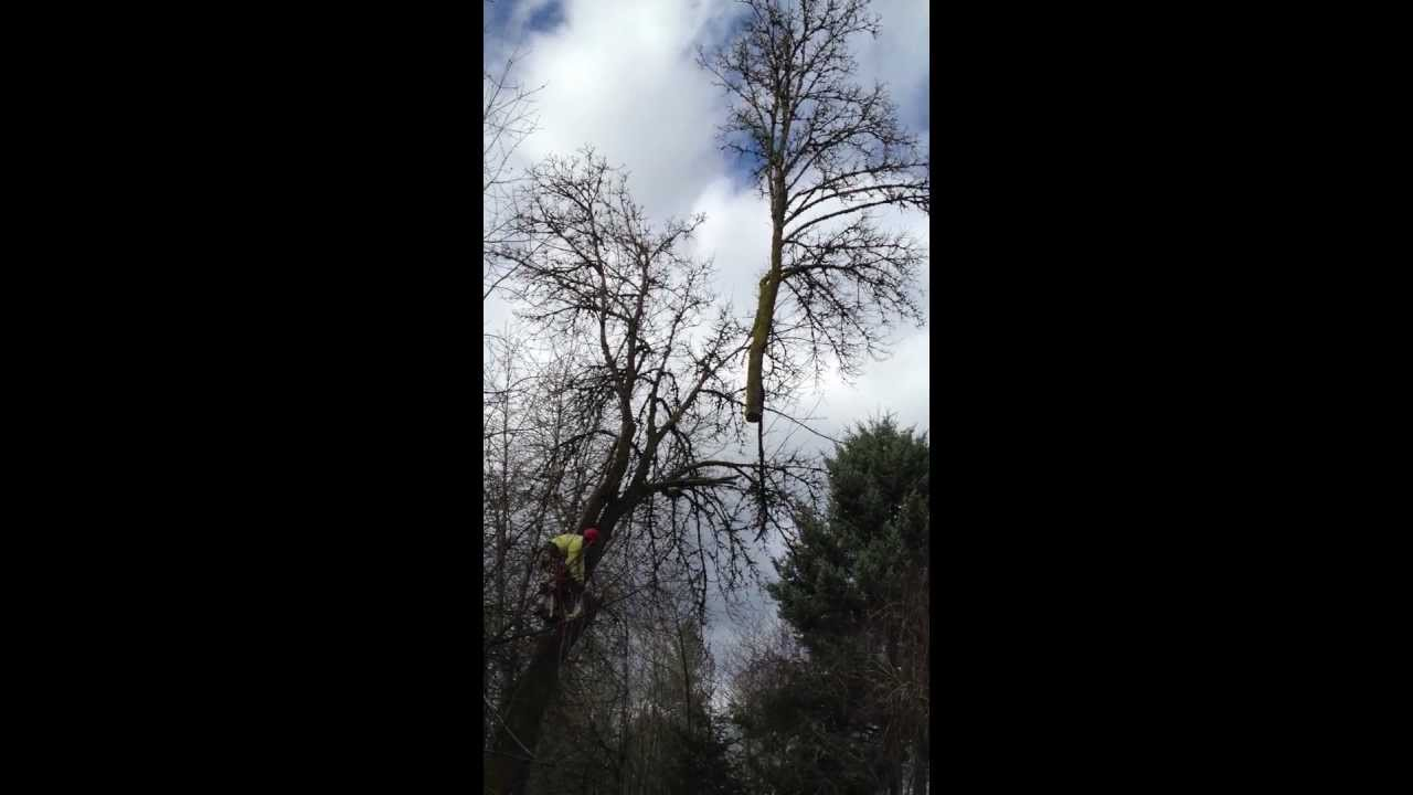 J And F Tree Service Removal Portland Or