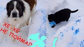 ЧЕЛЛЕНДЖ Снежный лабиринт. Снегоежка. Говорящая собака Булат и говорящие коты. Арт Суперкот