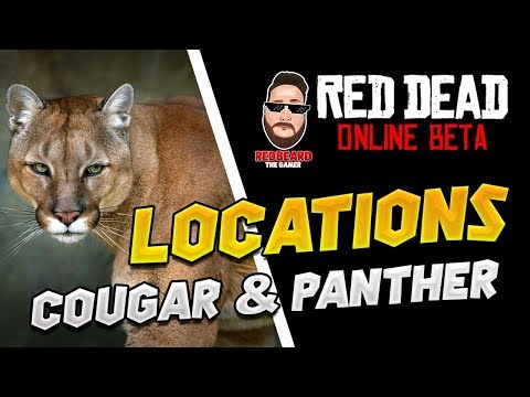 📍Cougar & Panther📍 Locations in Red Dead Online  (XP, GLITCH, UPDATE)  Red Dead Redemption 2