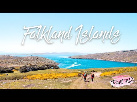 Antarctica Expedition: Part 2 of 7 ~ The Falkland Islands 🇫🇰 (Day 4 to 5 Vlog with Hurtigruten)