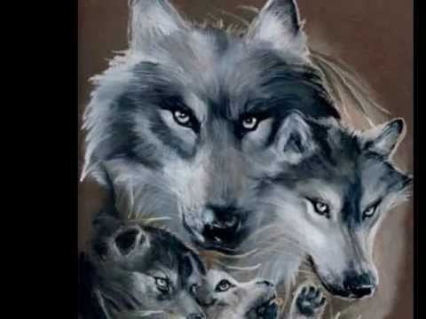 gray wolf.wmv
