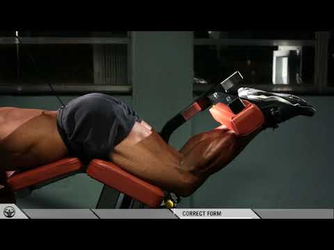 THE BICEP OF THE LEG: HAMSTRINGS AND THE LEG CURL