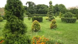 Топиарные стрижки в вашем саду, идеи!