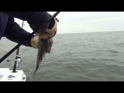 Striper Fishing Delaware Bay