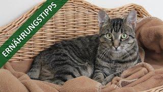 Ernährungstipps für Katzen | TierheimTV informiert