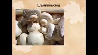 Шляпочные грибы.AVI