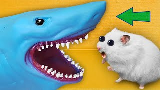 Best Hamster Mazes 🐹 [OBSTACLE COURSE]