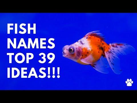 🐠 Fish Names - 39 BEST & CUTE & TOP Ideas | Names