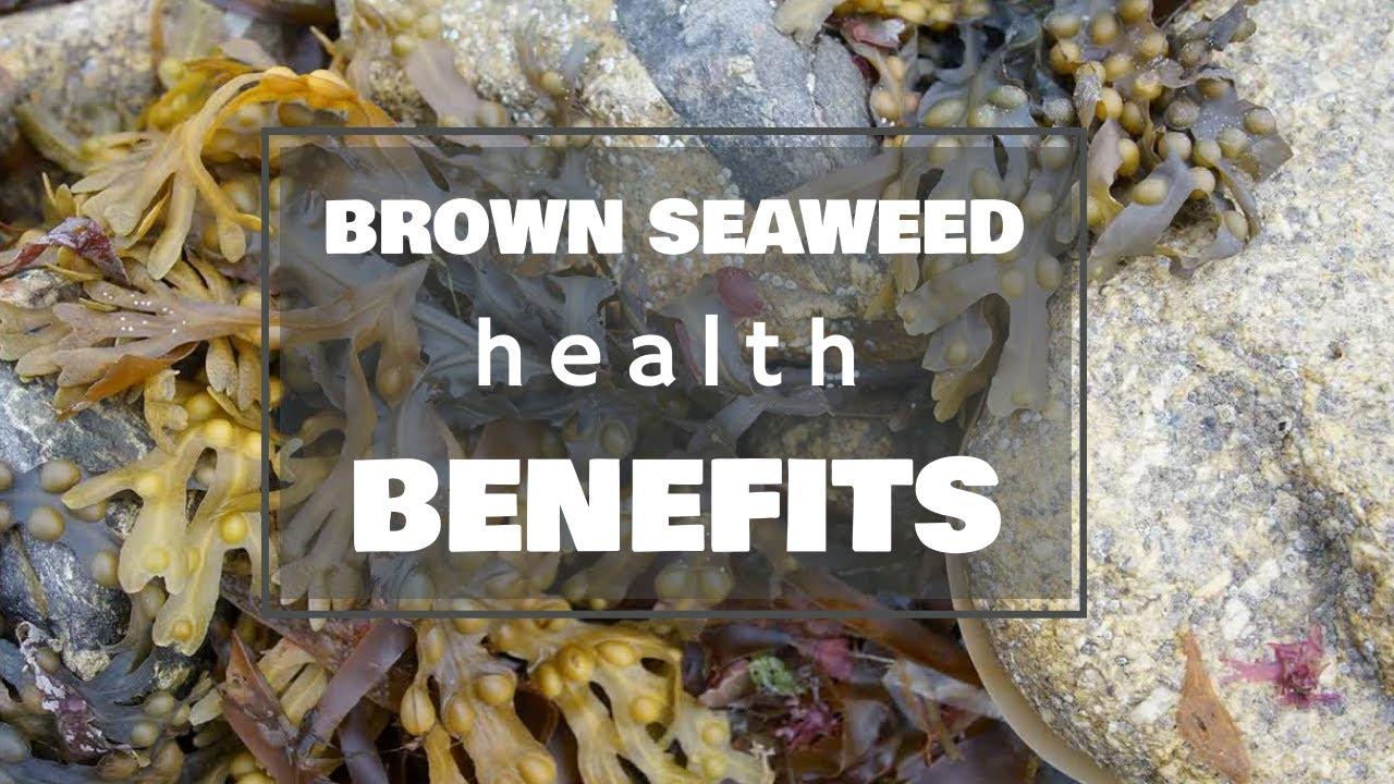 tengeri tengeri moszat segít a fogyásban