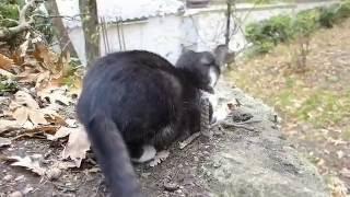 Как я снимал котов и кошек