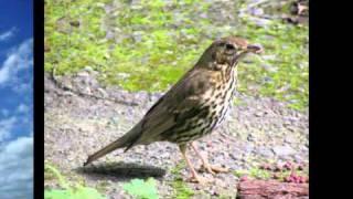 Hlasy okolo nás: Ptáci - 3