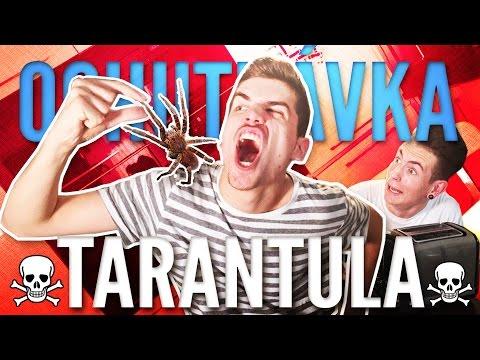 ZJEDOL SOM TARANTULU?! | OCHUTNÁVKA | GoGo & Exploited