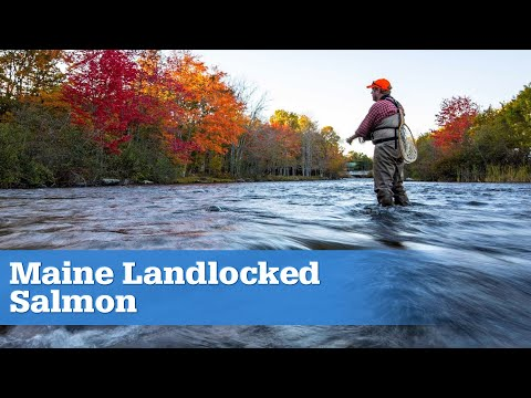 Fishing Maine For Beautiful Landlocked Salmon | S15 E05