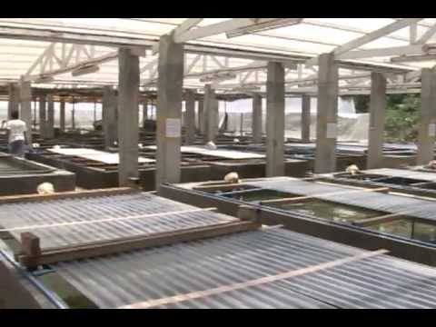 Marine Biology Project: Laboratory & Hatchery for Giant Clam