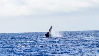 Catamaran Kahanu Whale Watching Kauai