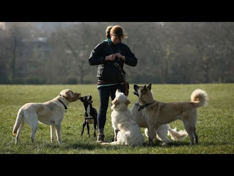 Anti-social powers revised after dog walkers and buskers targeted