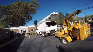 HUGE TREE OVER A BUILDING!!! Charlottesville, VA Tree Service