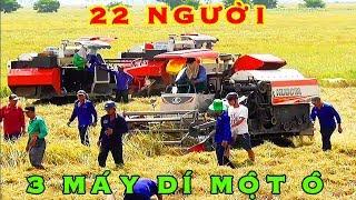 Momento raro 22 cazadores rata y 7 cosechadoras combinadas máquina Kubota DC70