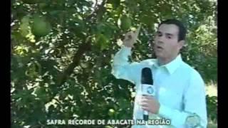 Safra Record de Abacate na Região - Balanço Geral - Cristina Trovó