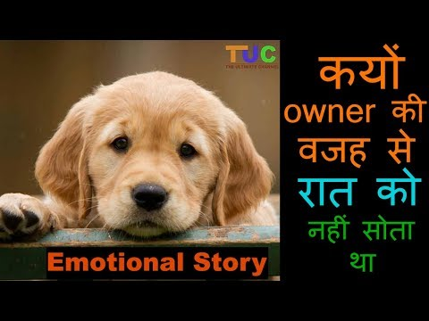 Emotional Story Of a DOG Who Lost TRUST On HUMANS : Dog Stories : The Ultimate Channel