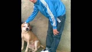 noizy mbretrojme hala ( New Hits 2010)
