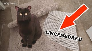 Boo Day 325 [Uncensored] - Another Messed Up Rug, Mail Time, and Boo Eating Closer To The Cats