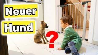 Neuer Hund? - Ich nehm euch mit zum Sport - Vlog#1080 Rosislife
